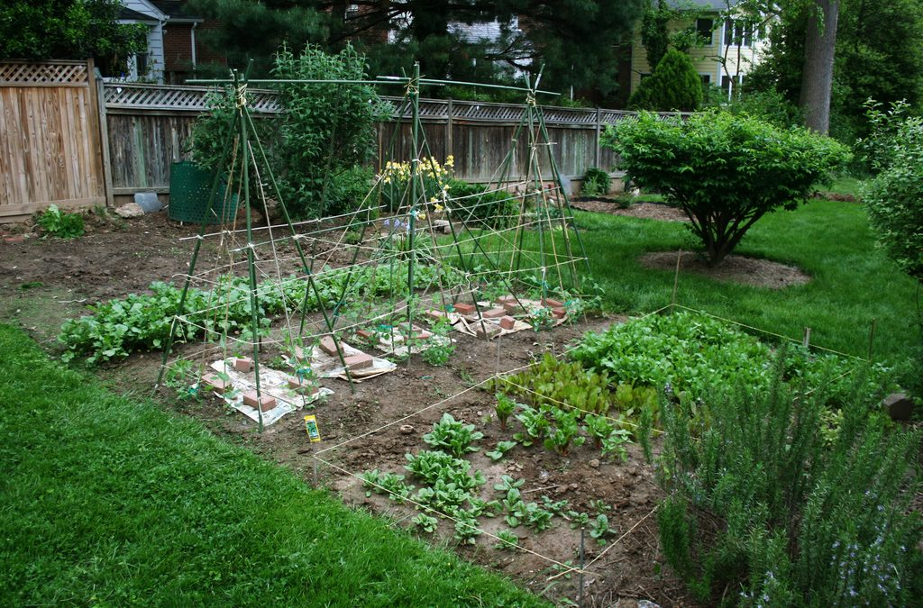 Garden and Landscaping Trends Start With Soil Inspections